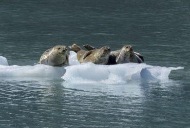 Alaska, dincolo de salbaticie