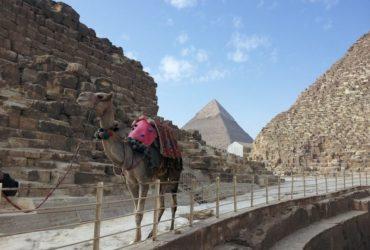 Napoleon  in fata  piramidelor